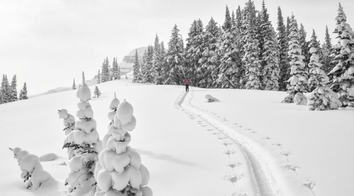 Picture of Teton Backcountry Skiing and Riding